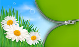 Nature background with spring flowers and  zipper.