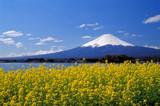 河口湖の菜の花富士 - Fine Art prints
