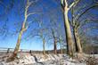 Arbre hiver et ciel bleu