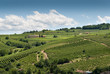 vigneti sulle colline del Piemonte in Italia