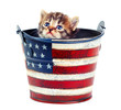 Kitten in the bucket