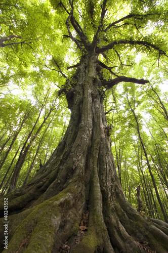 pionowe-zdjecie-starego-drzewa-w-zielonym-lesie