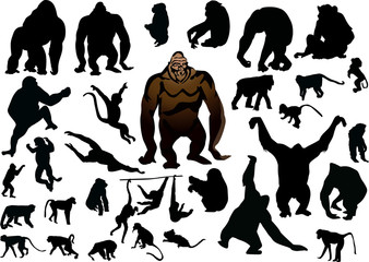 set of isolated different monkeys
