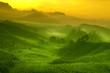 Leinwanddruck Bild - Tea plantation