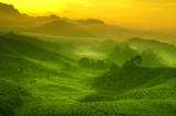 Fototapeta piękny - plon - Wzgórze