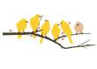 Yellow Bird Decal artwork