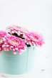 Pink Gerbera Flowers in a Pot