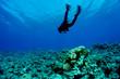 Leinwanddruck Bild - Scuba Diver and Coral Reef