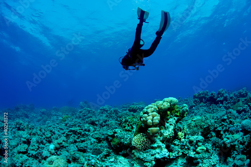 Leinwanddruck Bild Scuba Diver and Coral Reef