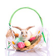 Cute bunny in easter basket