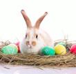 Easter bunny in velour grasses