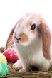 Easter bunny portrait