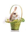 cute rabbit in the basket