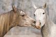 kiss horses
