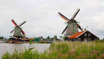 Kinderdijk Dutch Windmills and Flowers