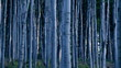 Moody birch forest