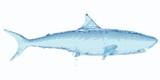 Water shark. 3d rendering