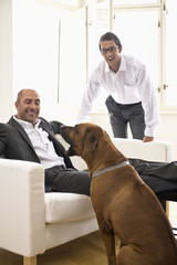 Businessman sitting on sofa and playing with dog