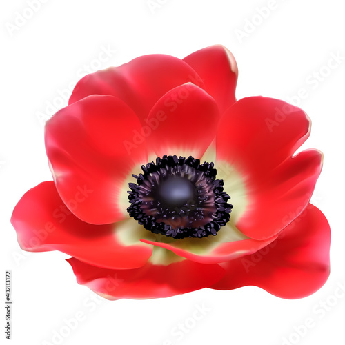 Red flower spring blossom