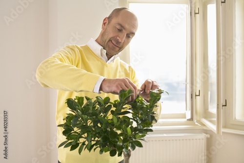 Mature man pruning plant with scissors