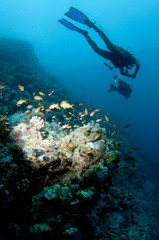 shilouetted scuba divers swim over reef