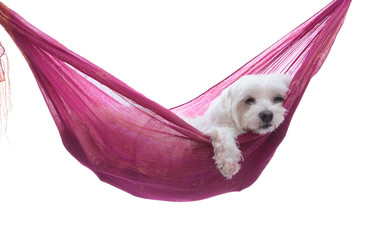 Just hanging around - puppy dog in hammock