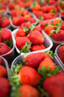 farmers market series - fresh strawberries