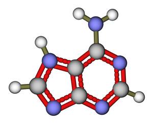 Nucleobase adenine molecular structure