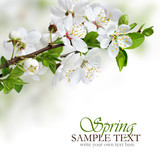 Spring flowers design border background - 40294100