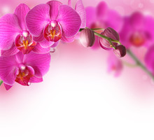 "Постер, картина, фотообои ""Orchids design border with copy space"""