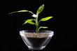 Junge Pflanze in Schale