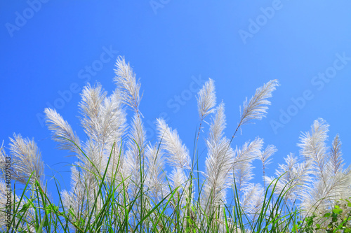 Grass flower and blue sky