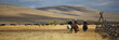 Cattledrive - 40297996