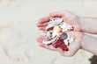 Close up of seashells