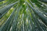 Fototapeta dynamic bamboo forest