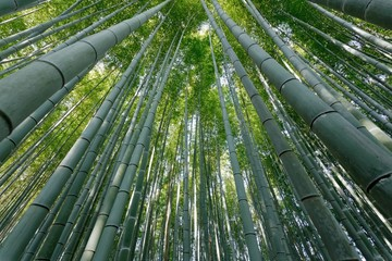 dynamic bamboo forest