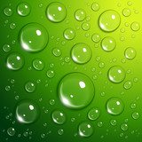 Water drops on green - 40303733