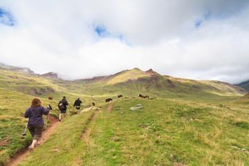 Trekking among the horses
