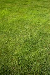 Pelouse, gazon, herbe, jardin, vert, tondre, parc, printemps