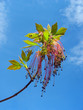 Maple twig with red catkins against blue sky background