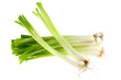 Fresh green Spring Onions, isolated on white background
