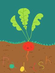 pianta di ravanello