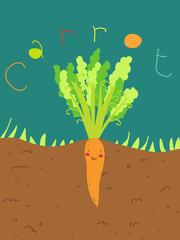 pianta di carota