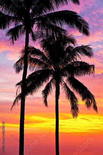 palm trees on the background of a beautiful sunset - 40318739