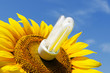 energy saving lamp in sunflower