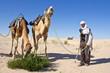 Sahara : Dromadaires mangeant un arbuste