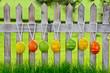 Ostereier am Zaun