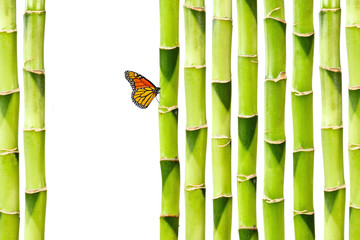 Schmetterling im Bambus Garten