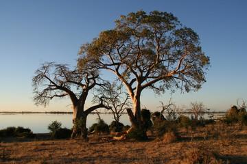 Chobe National Park, Chobe River, Botswana, Africa