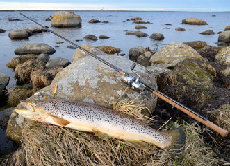 Sea trout fishing trophy